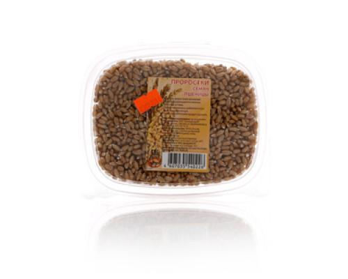 Проростки семян пшеницы