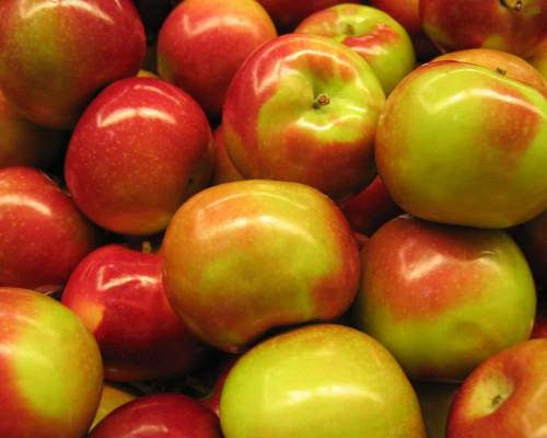 Яблоки Кубани