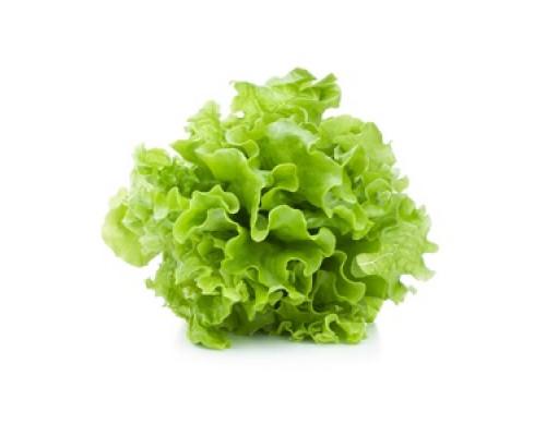 Салат Оклиф зеленый в горшочке ТМ Лидер Фреш
